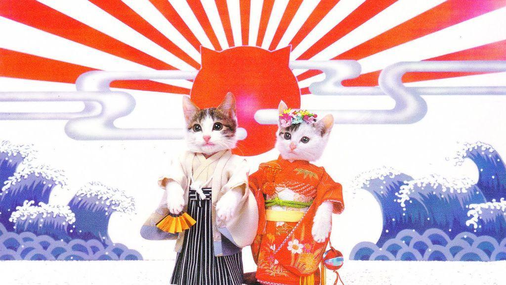 5 razones por las que tienes que dejarlo todo e irte a vivir a Japón (si te gustan los gatos)
