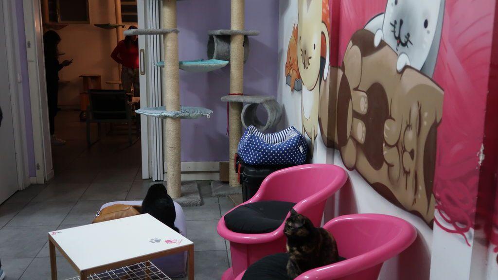 Los gatitos de La Gatoteca de Madrid
