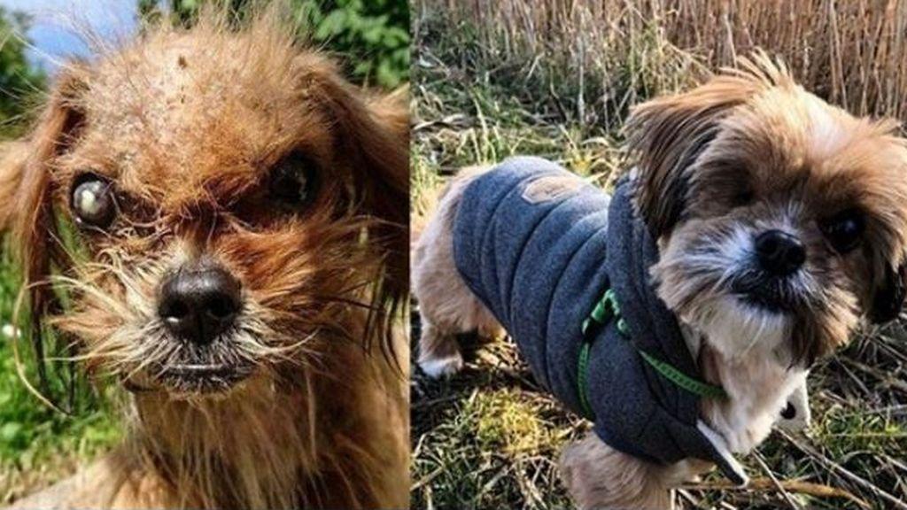 Un perro callejero recupera su belleza tras ser rescatado