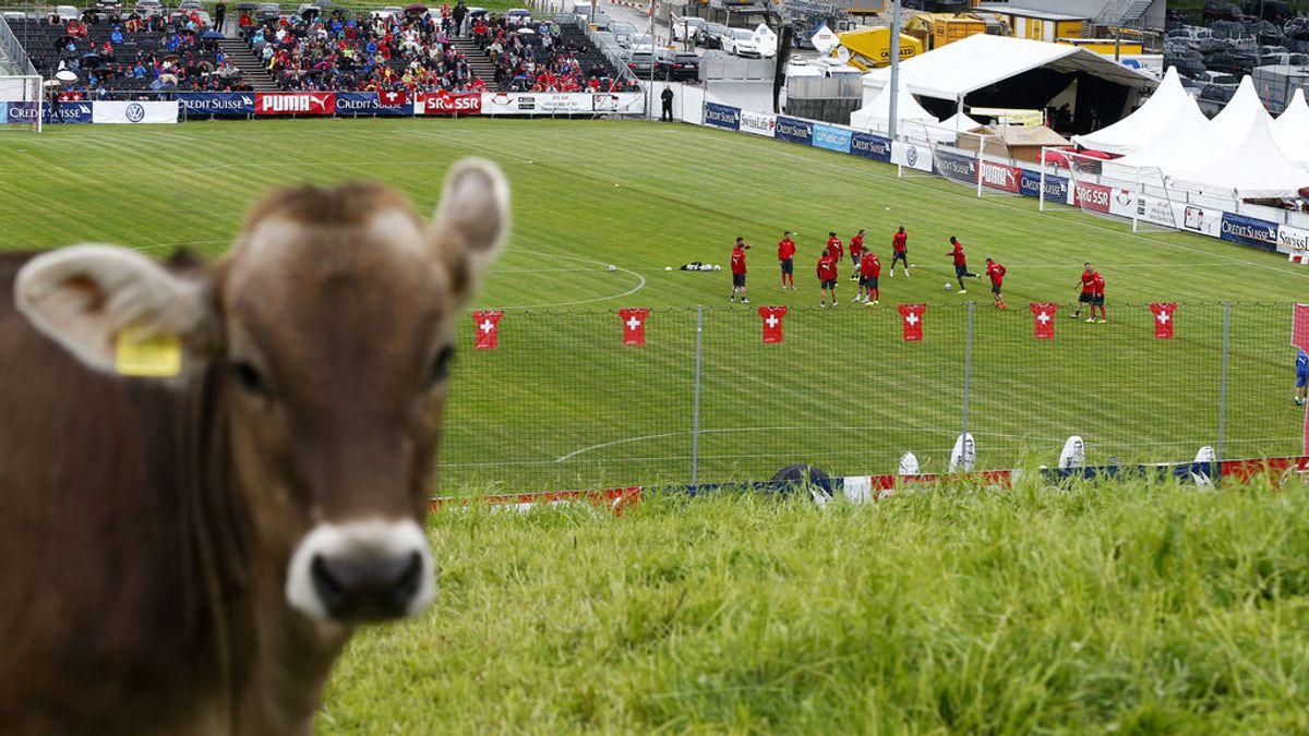 Un equipo se queda sin sus tres porteros después de que el tercero fuera lesionado... ¡Por una vaca!