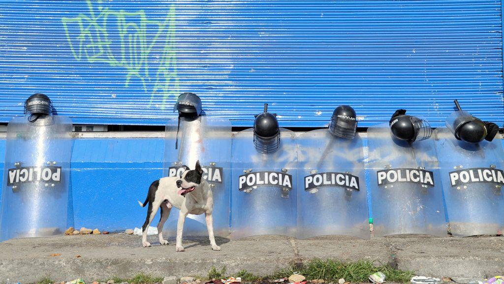 Un perro observa los escudos de la policía ante un supermercado supuestamente vinculado a las FARC en Bogotá, Colombia