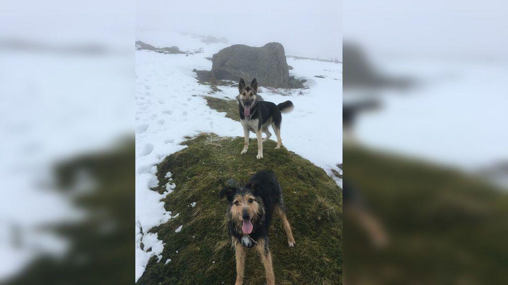 Escala el tercer pico más alto de Inglaterra para rescatar a unos perros desconocidos