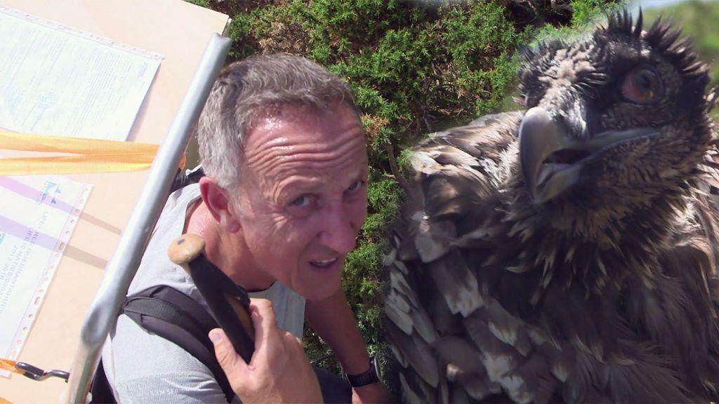 ¡Emocionante! Kike Calleja transporta a Pilar, un quebrantahuesos, a su nuevo hábitat en los Picos de Europa