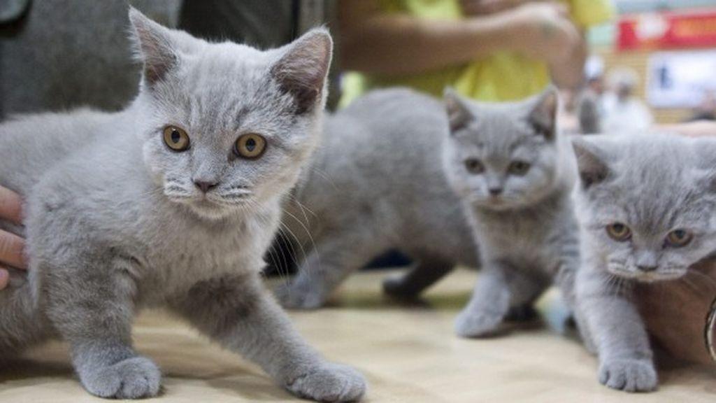 Condenados en Málaga por la muerte de cinco gatos de su vecina con bolitas de carne envenenada
