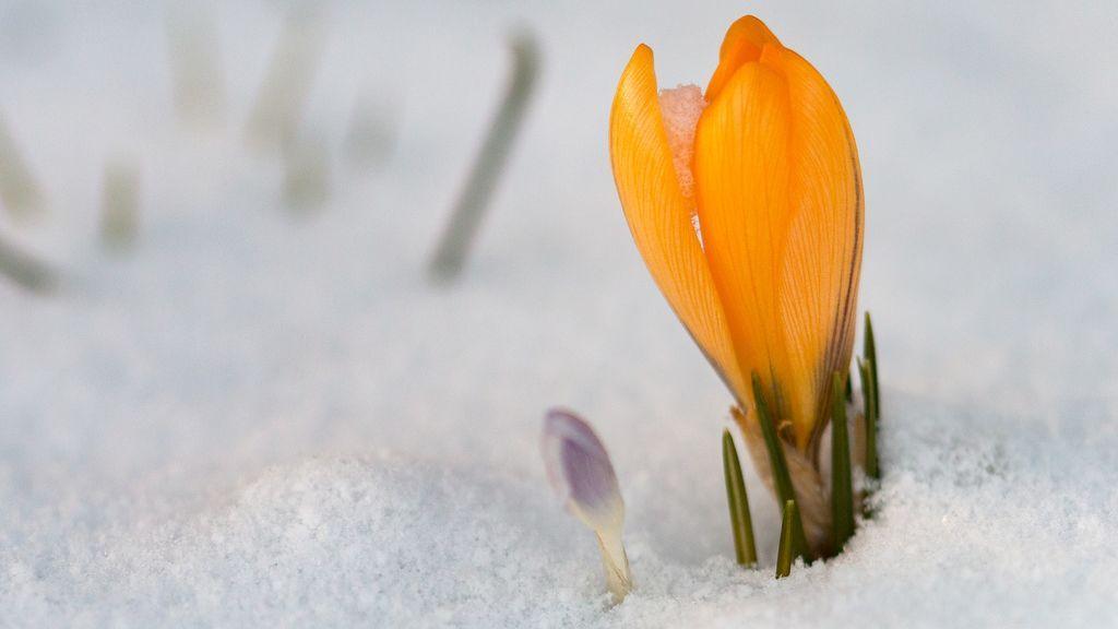 Sí, has leído bien: ¡ya estamos en primavera (meteorológica)!