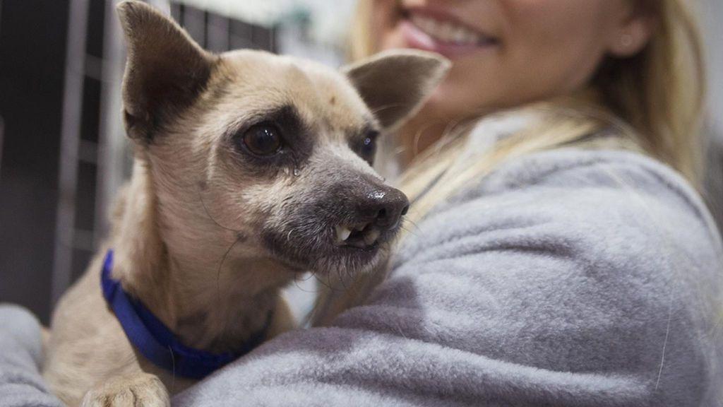 Reconstruyen la boca a un perro abandonado que no podía comer por un posible traumatismo