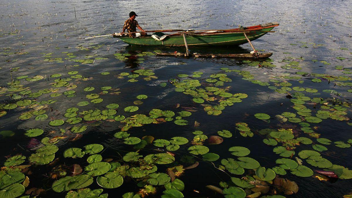 La biodiversidad desaparece a un ritmo mil veces superior al natural, alerta la ONU