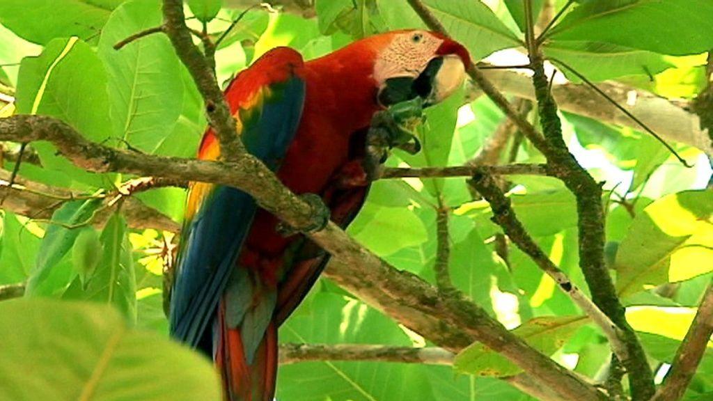 Callejeros Viajeros: Costa Rica