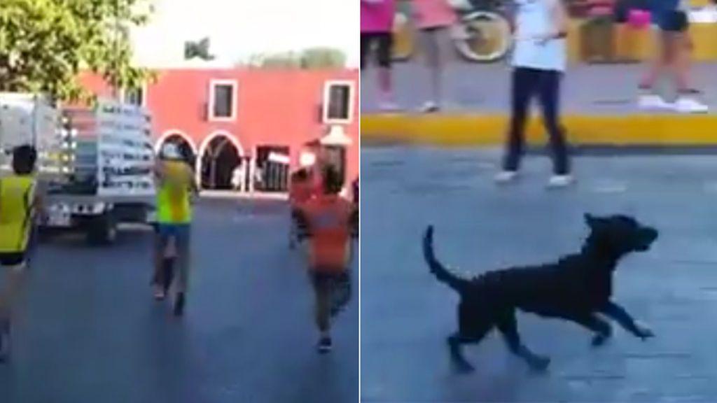 La brutal agresión de un atleta a un perro cachorro en plena maratón de Valladolid (México) que indigna a las redes