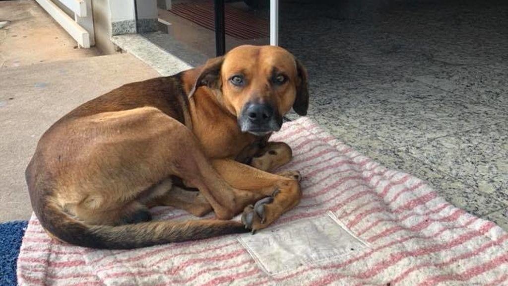 Un perro espera en el hospital a su dueño, muerto cuatro meses atrás