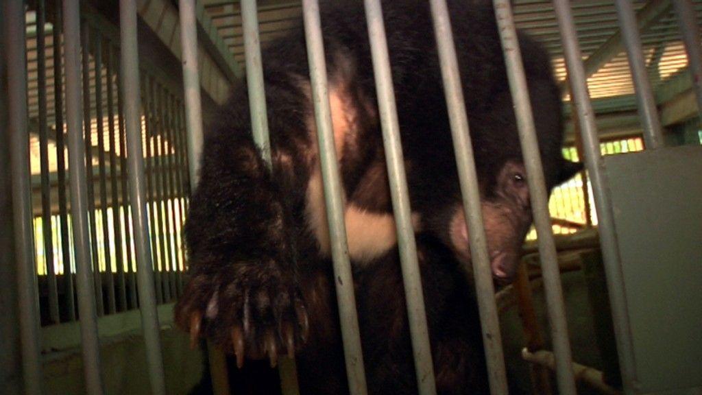 Frank Cuesta denuncia a las mafias que explotan a los osos en Vietnam