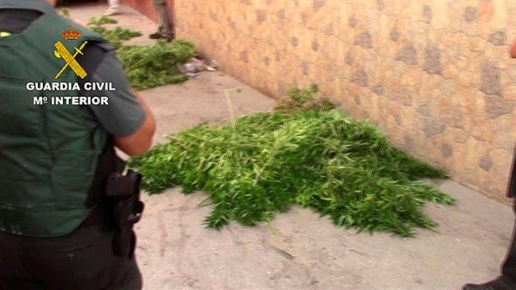 Detenidas 30 personas por cultivar marihuana y 1.273 plantas intervenidas en Málaga