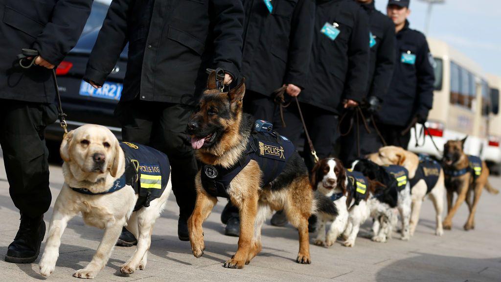 Perros policía en fila