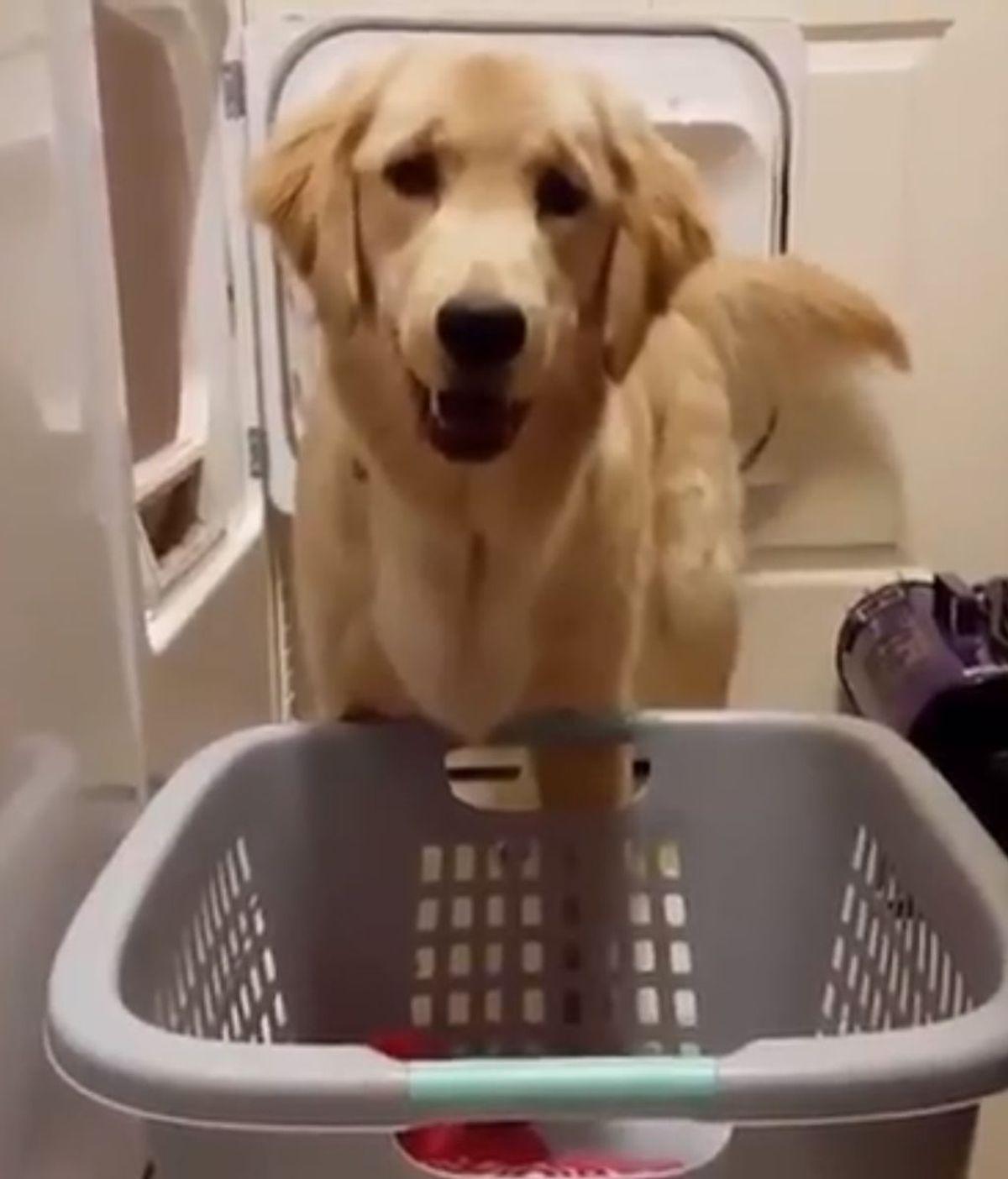 No sabemos si este perrete estropeó la colada o ya estaba así cuando él llegó
