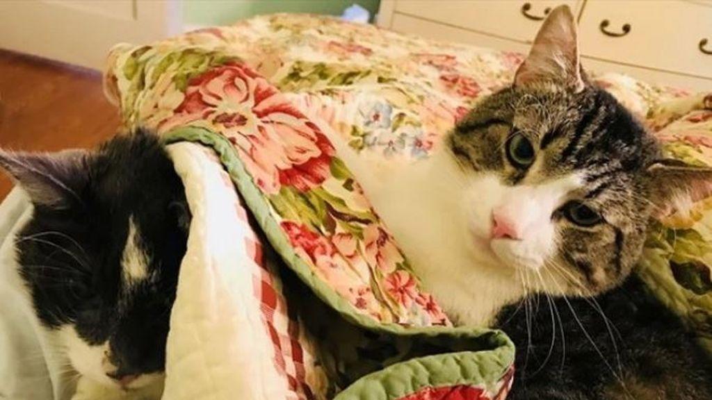 Se gasta 15.000 euros en un trasplante de riñón para su gato de 17 años para que pueda sobrevivir