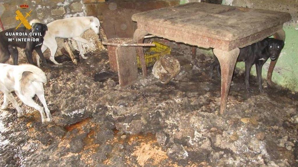 Investigada por tener 21 perros y 8 gatos en pésimas condiciones en Zaragoza