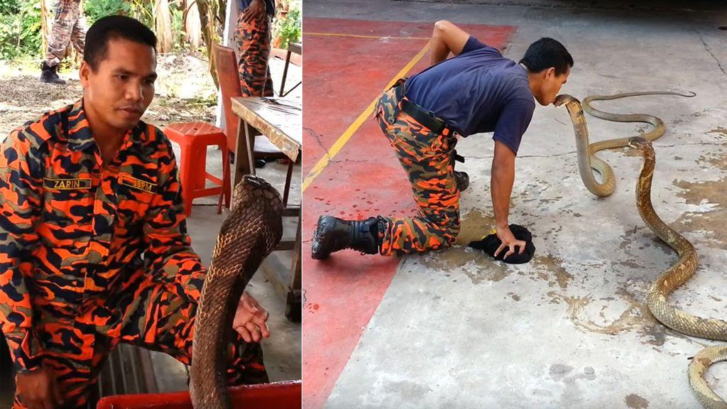 Muere un famoso encantador de serpientes por una mordedura de una cobra