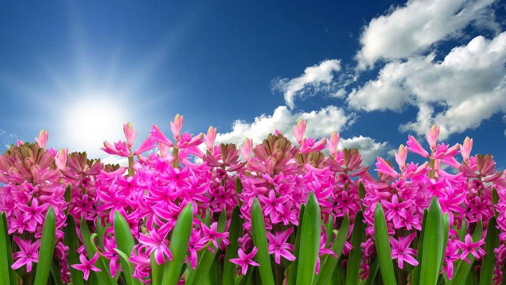 ¡La primavera ya está aquí! Te contamos cómo hacer frente a esta semana de cambios