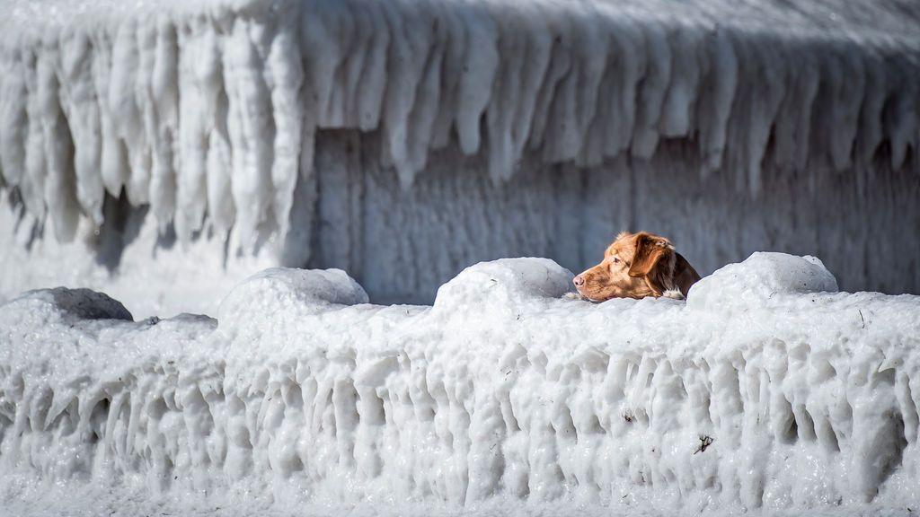 Un perro mira por encima de una casa cubierta de hielo en la bahía de Faxe, al sur de Copenhague (Dinamarca)