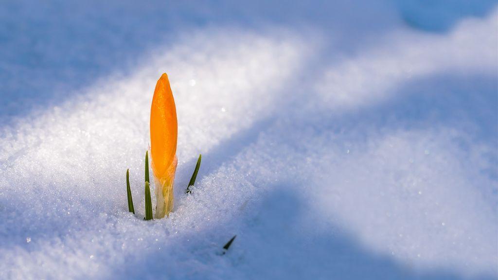 Inicio invernal de la primavera: te contamos cómo va a evolucionar la estación de las flores