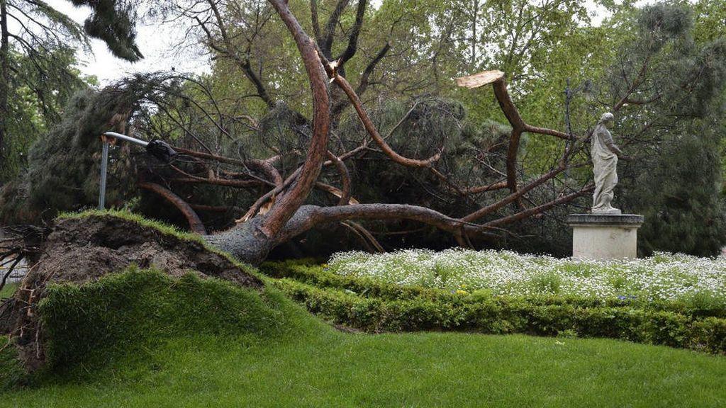 El Retiro y los Jardines de Sabatini, cerrados por riesgo de caída de árboles