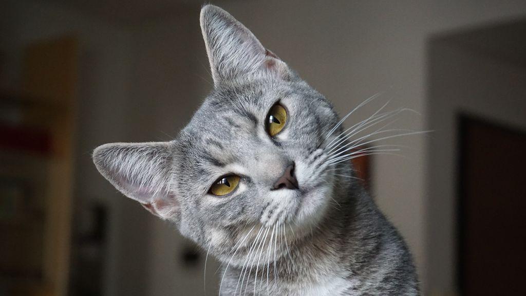 Facebookleaks: te explicamos el mayor escándalo de Facebook con gatitos