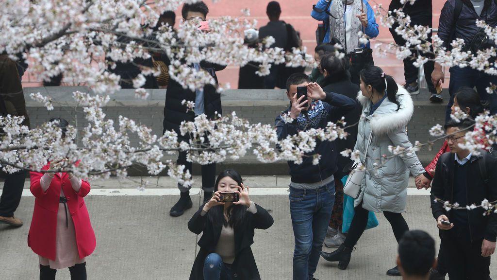 Espectáculo de los cerezos en flor de China