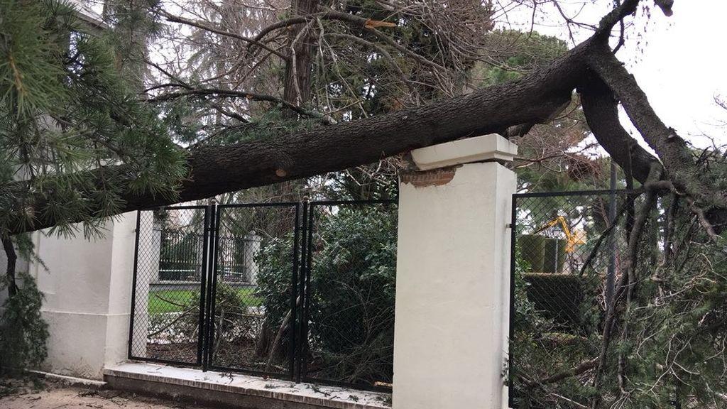 Herido un hombre de 34 años tras la caída de una rama en Madrid