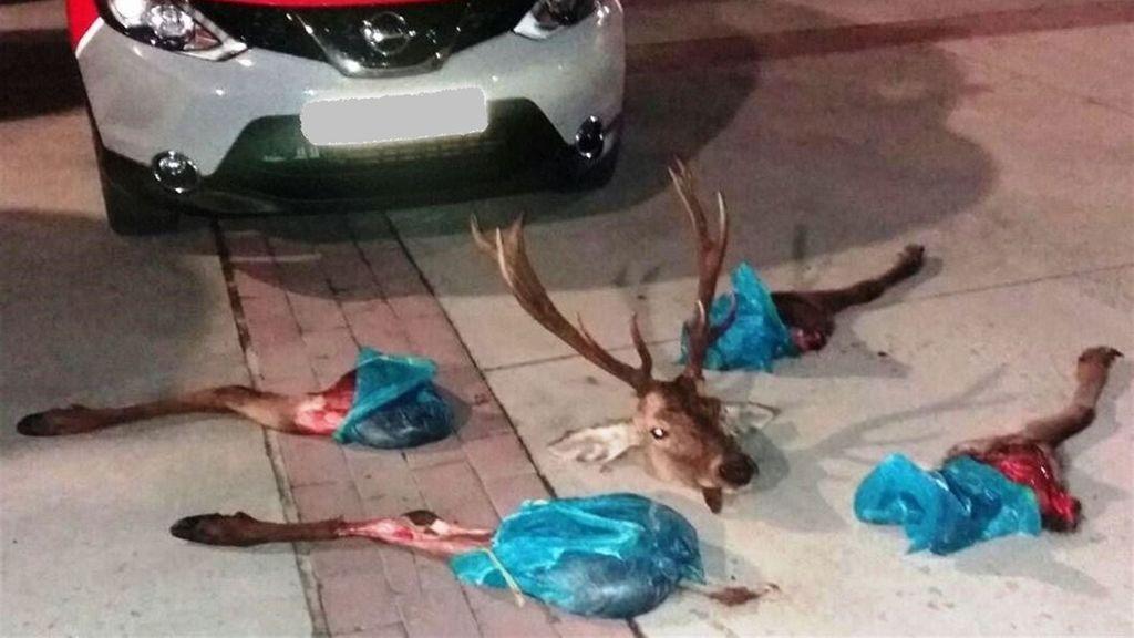 Sorprendidos con un ciervo descuartizado en su vehículo en Pamplona