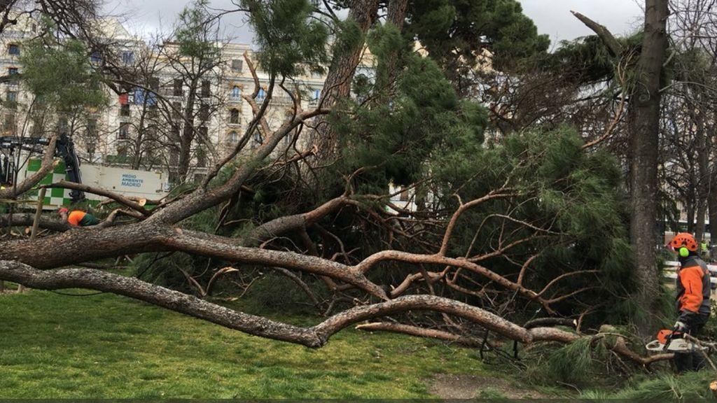 Las fuertes rachas de viento causan estragos en Madrid con graves consecuencias