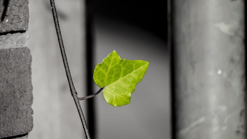 leaf-2922038_1920