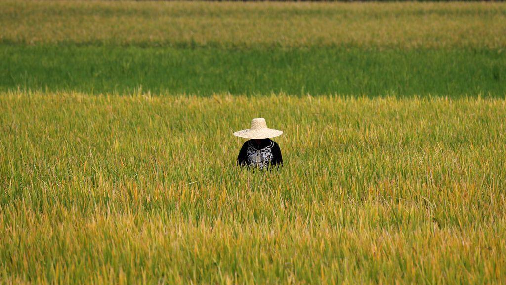 Impresionante imagen de un campo de arroz