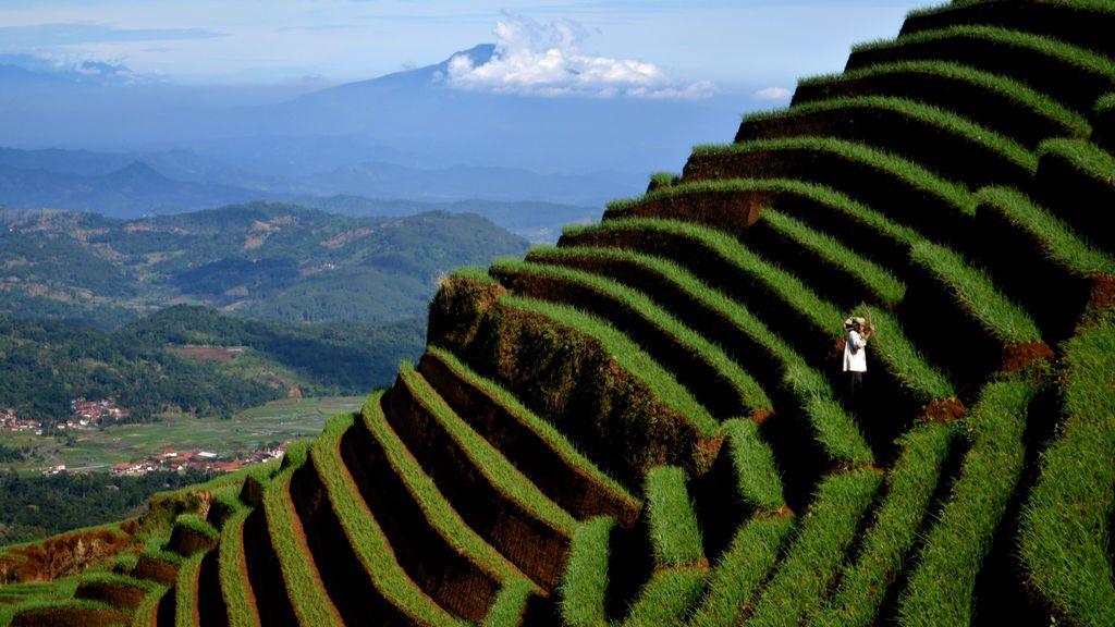 Laderas de cultivo de cebolla en Indonesia