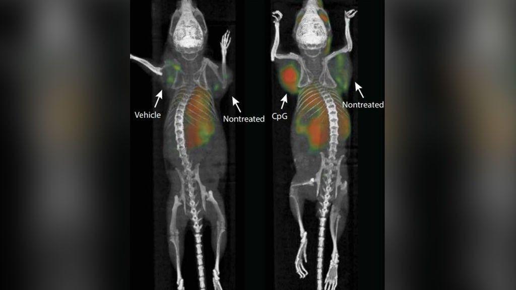 La vacuna contra el cáncer probada con éxito en ratones podría comercializarse en menos de un año