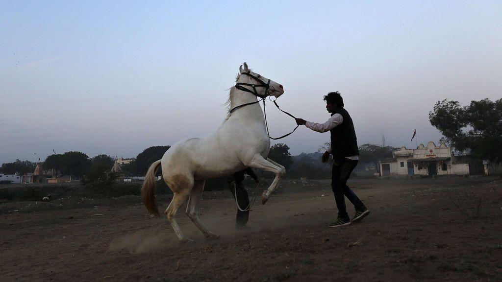 Golpean a un joven indio hasta causarle la muerte por tener un caballo