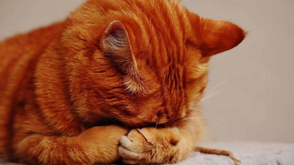 ¿Amante de los gatos? Tal vez no conozcas cómo los representaban en el Medievo