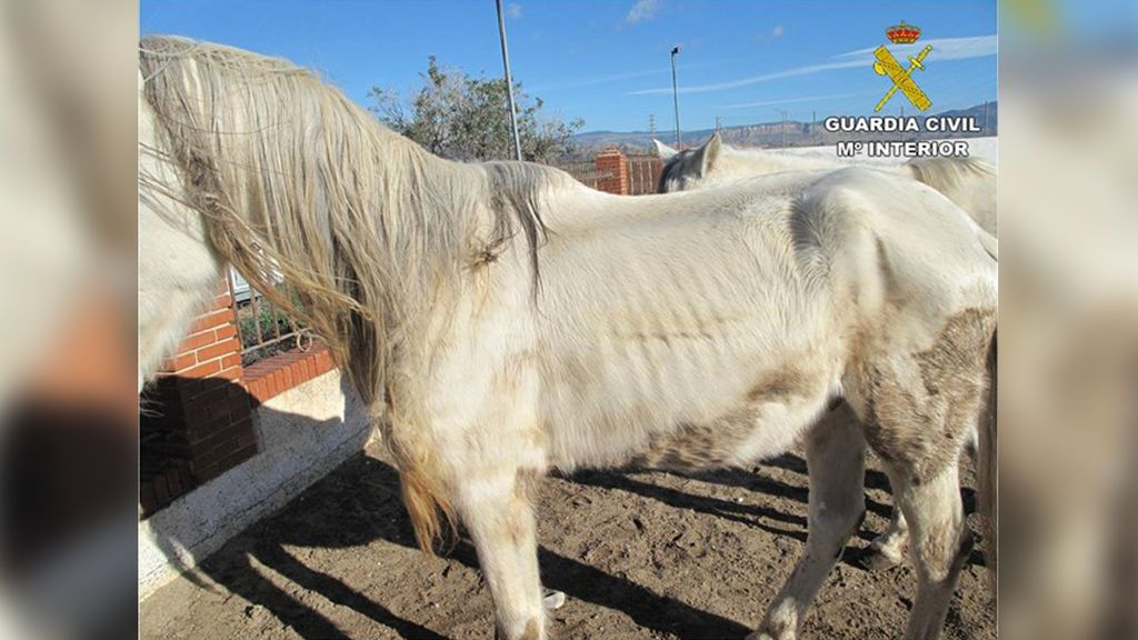 Hallan siete caballos desnutridos y que vivían abandonados entre basura en Alicante
