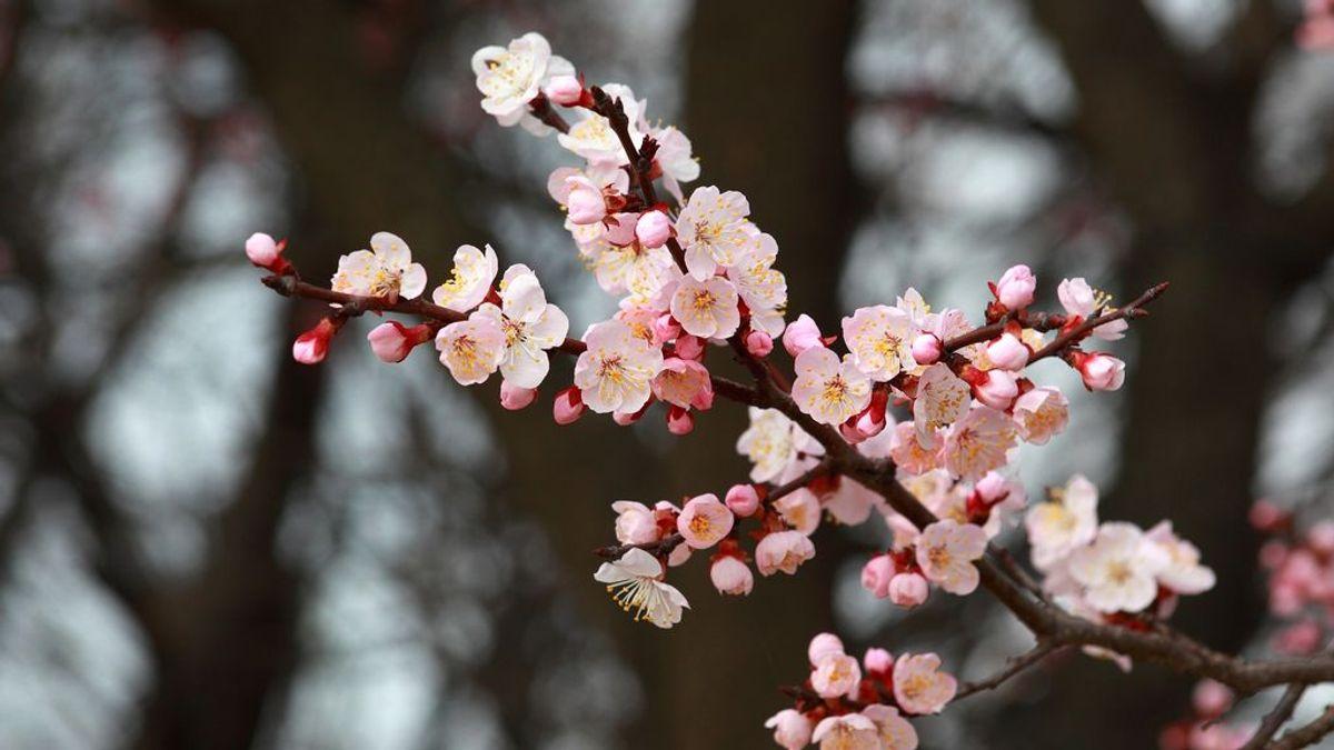 En abril, aguas mil: te decimos si este mes se cumplirá el refrán o tocará ya estar en manga corta