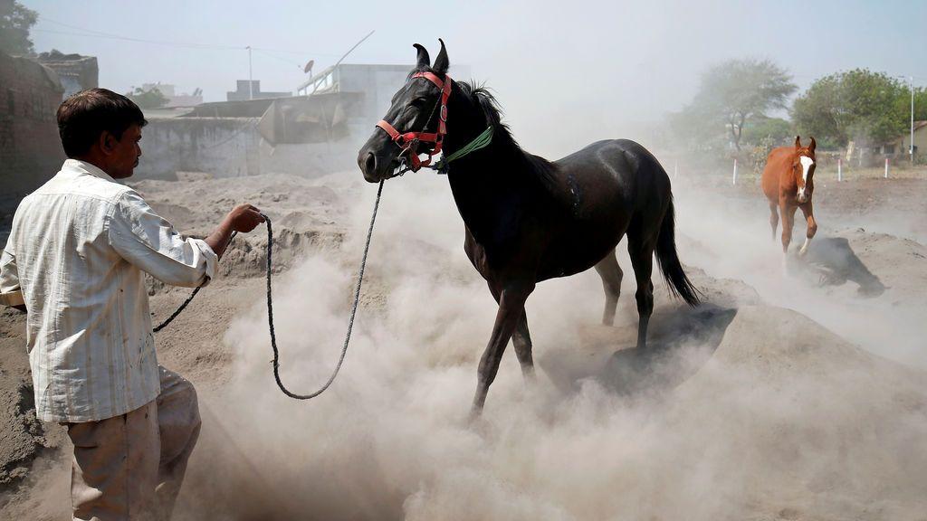 Entrenamiento de un caballo en India