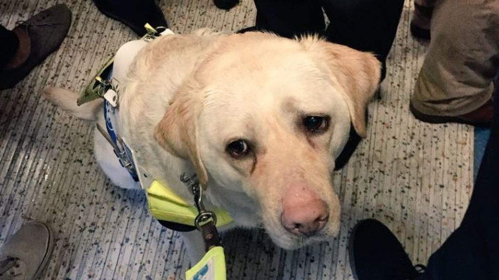 Un ciego y su perro guía, humillados en el metro por el egoísmo de los pasajeros
