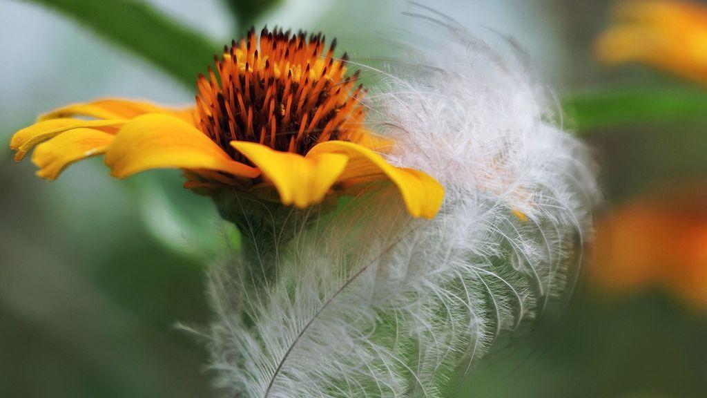 Cupresáceas, urticáceas y platanáceas: alerta roja por alergias en el país