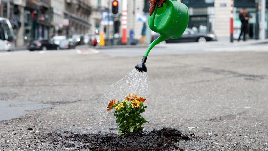 Flores nacen en un bache de Bruselas