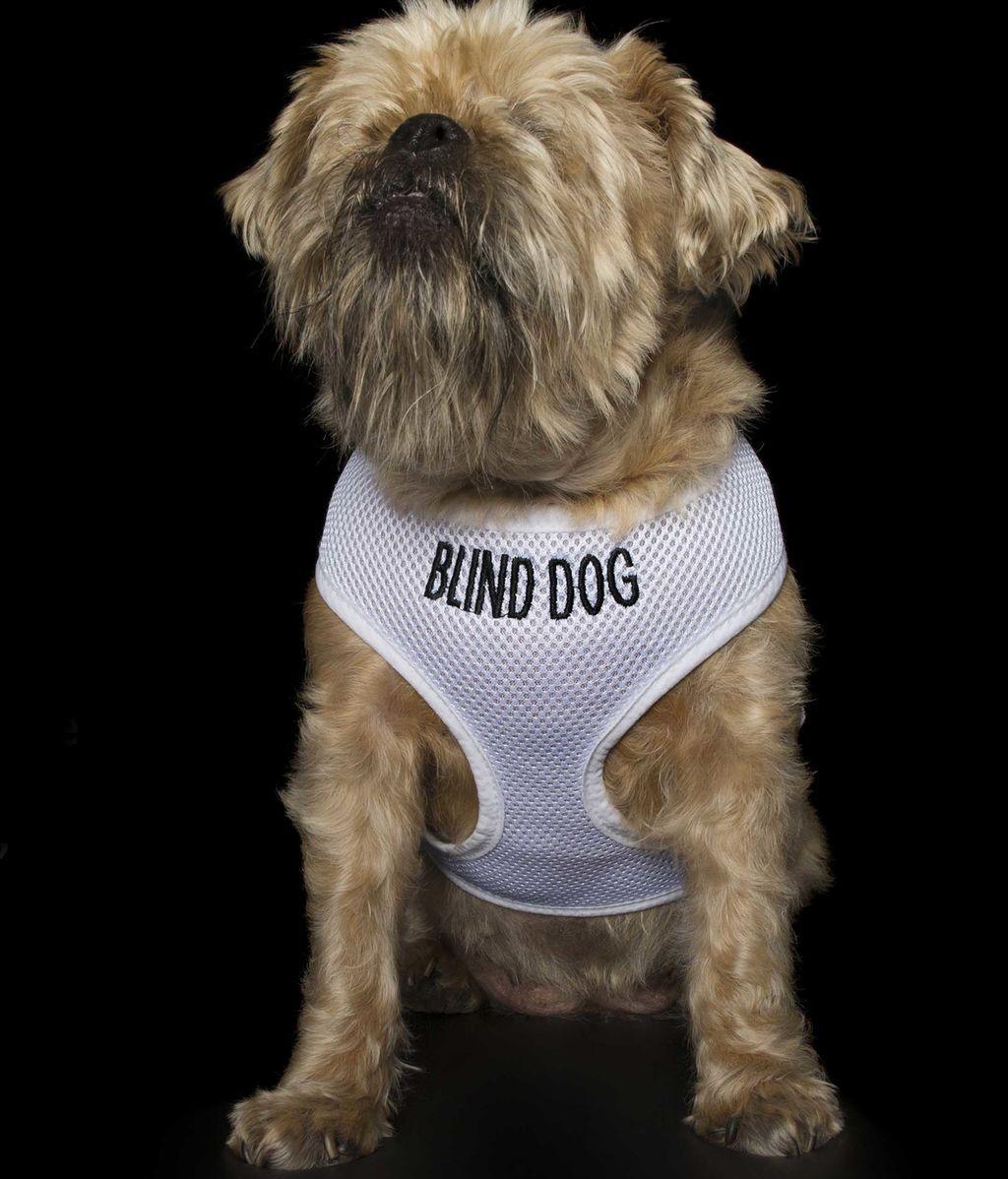 """Las """"perfectas imperfecciones"""" de estos perros rescatados"""