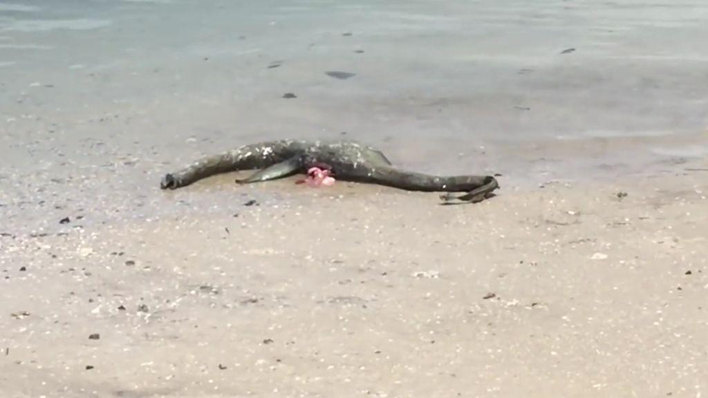 """¡Imágenes reales! Unos familiares encuentran al """"monstruo del lago Ness"""" en Georgia"""