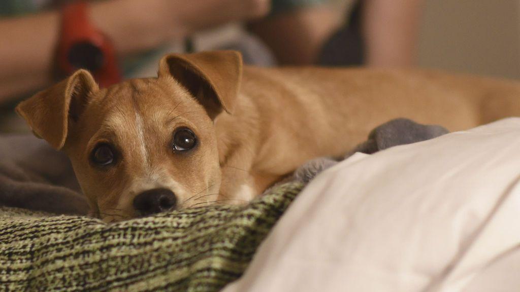 El primer paseo de tu cachorro, consejos que debes saber