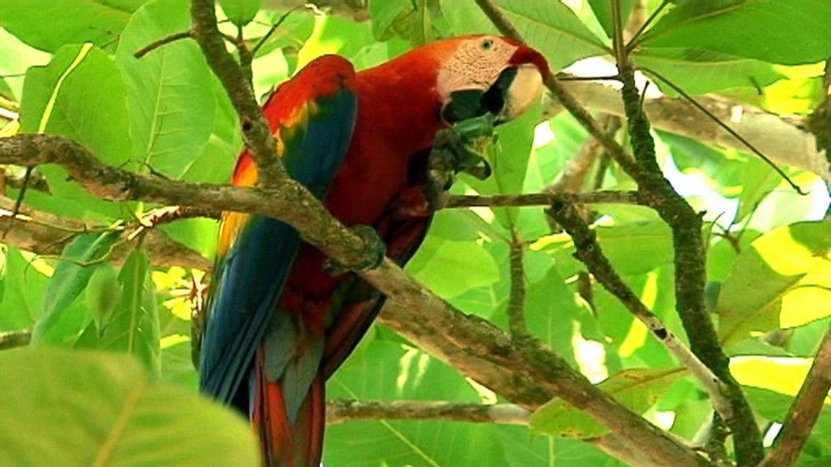 'Callejeros Viajeros' en Costa Rica salvaje