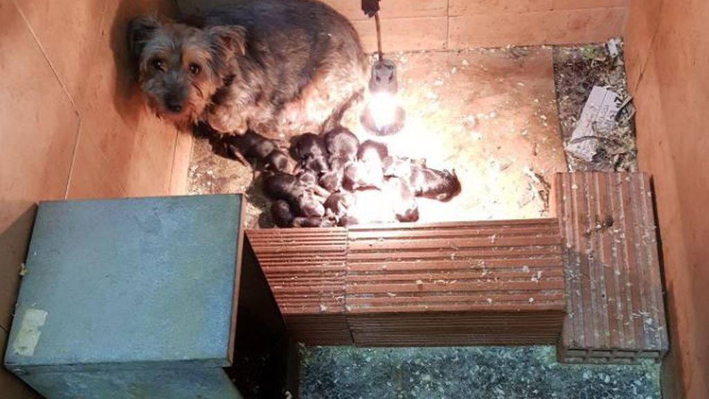 Encuentran 25 perros hacinados y en pésimas condiciones en un bajo de Valencia