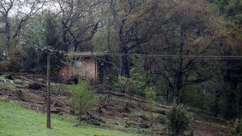 Continúa grave el niño de cinco años al que se le cayó un árbol en San Sebastián