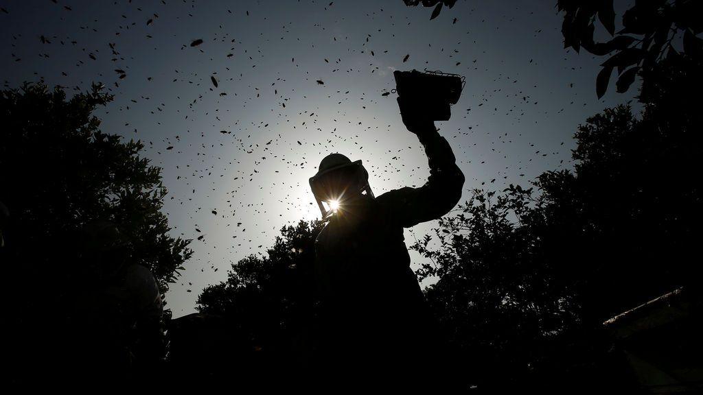 Humo para calmar a las abejas