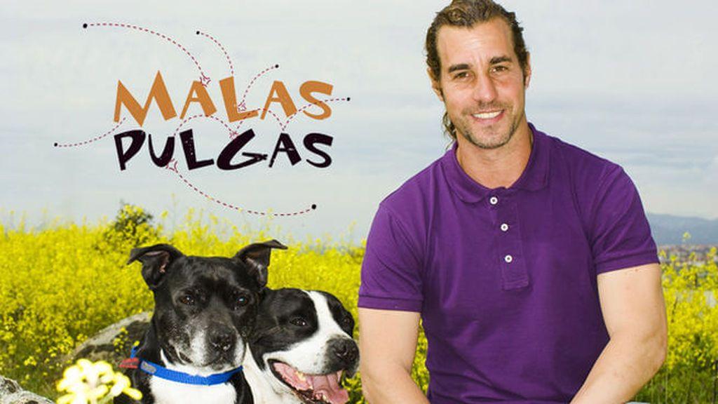 Los mejores consejos de nuestro encantador de perros, Borja Capponi